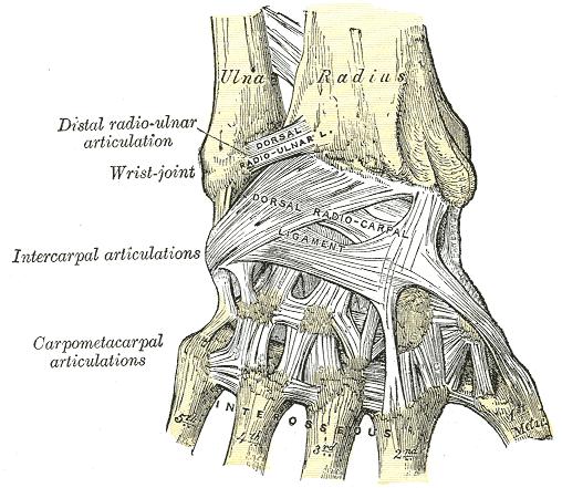 ízületek csontok fájnak a hát alsó részén