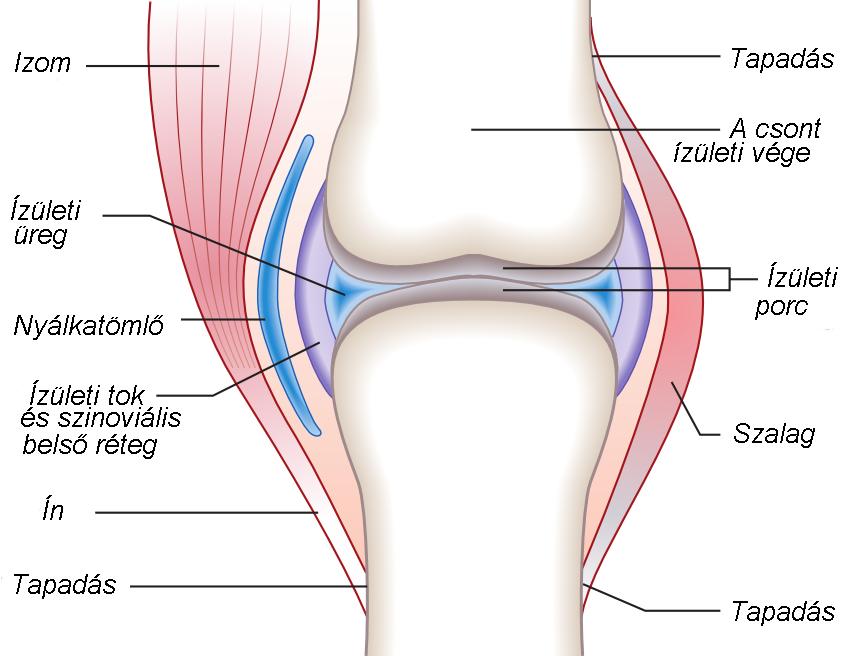 ízületi sérülések térdízület kezelése)