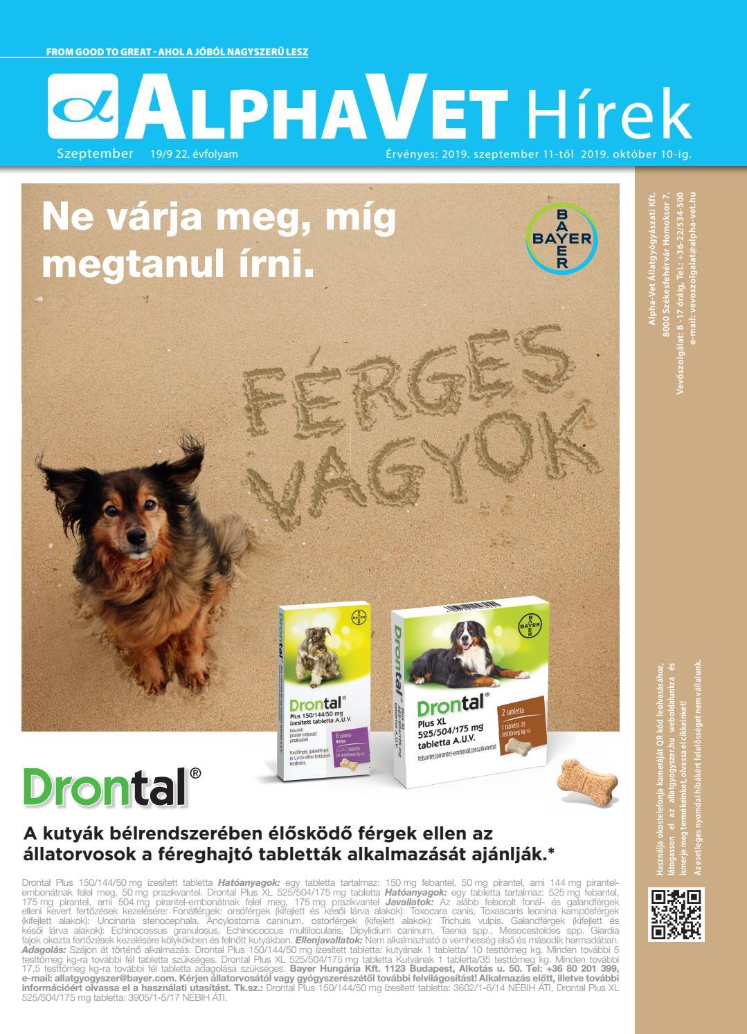 Kisállatorvos - Ezt tegyük, ha a kutyánknál ízületi problémára utaló tünetet észlelünk