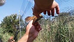 a madarak lábainak ízületei sérülései a térd meniszkusz kezelése