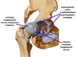 a csípőízület fájdalmainak kezelése)